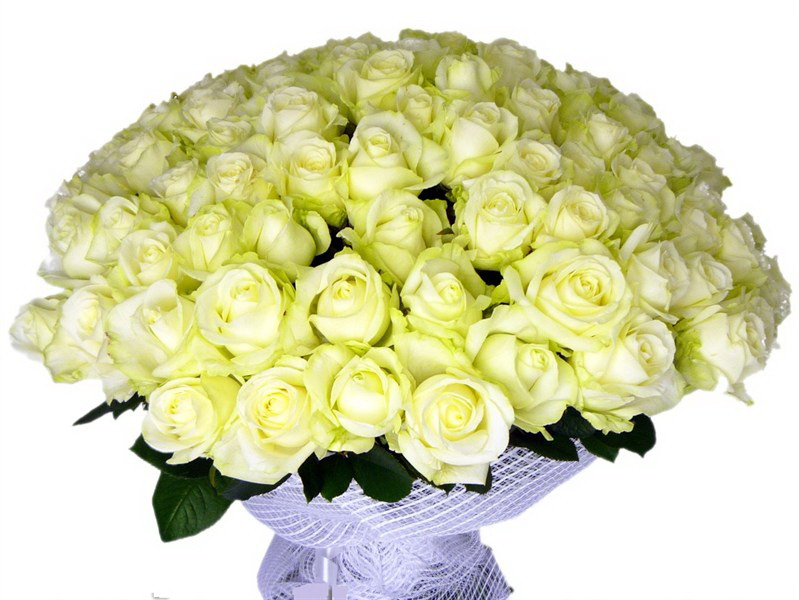 аваланж роза фото