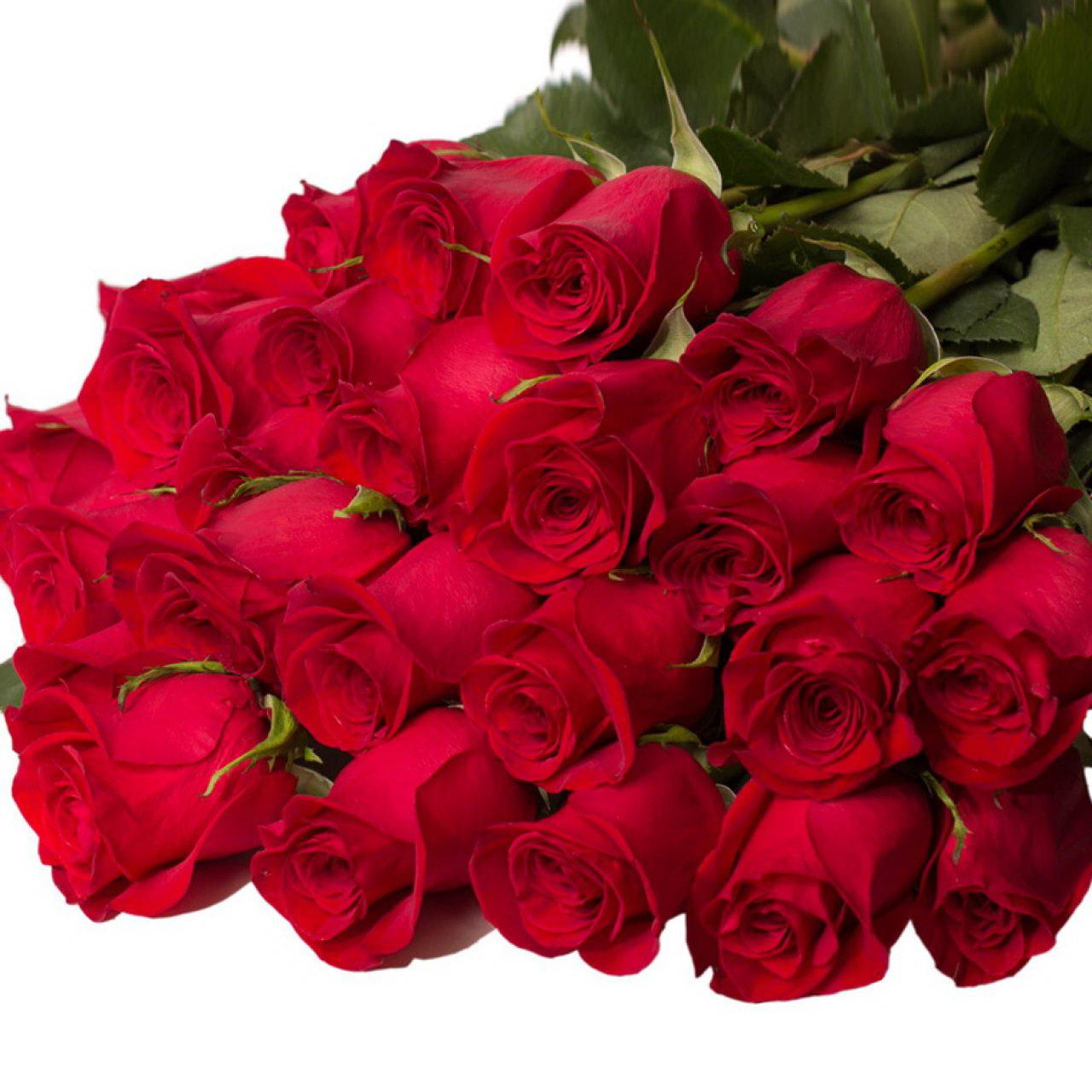 троянди квіти картинки